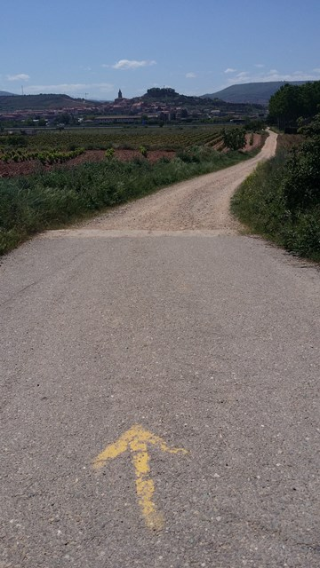 Walking from Logrono to Navarrete