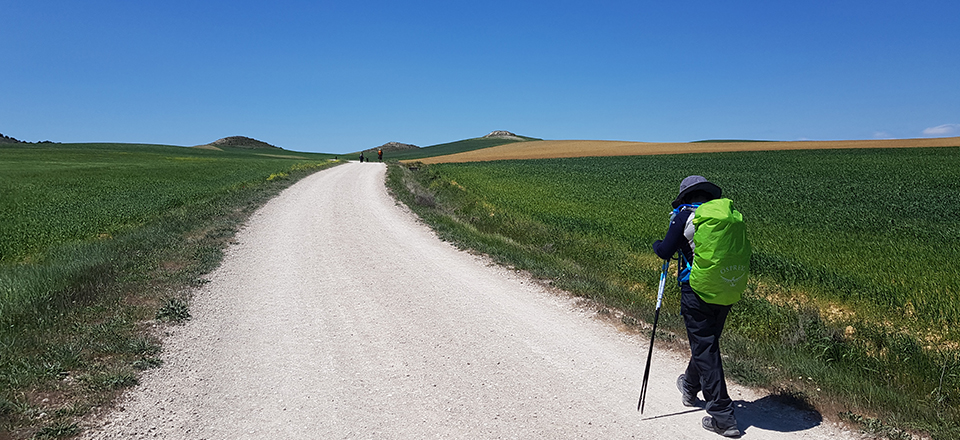 Camino Curved Ball