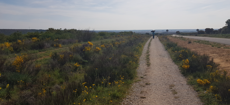Would I walk the Camino Frances again?